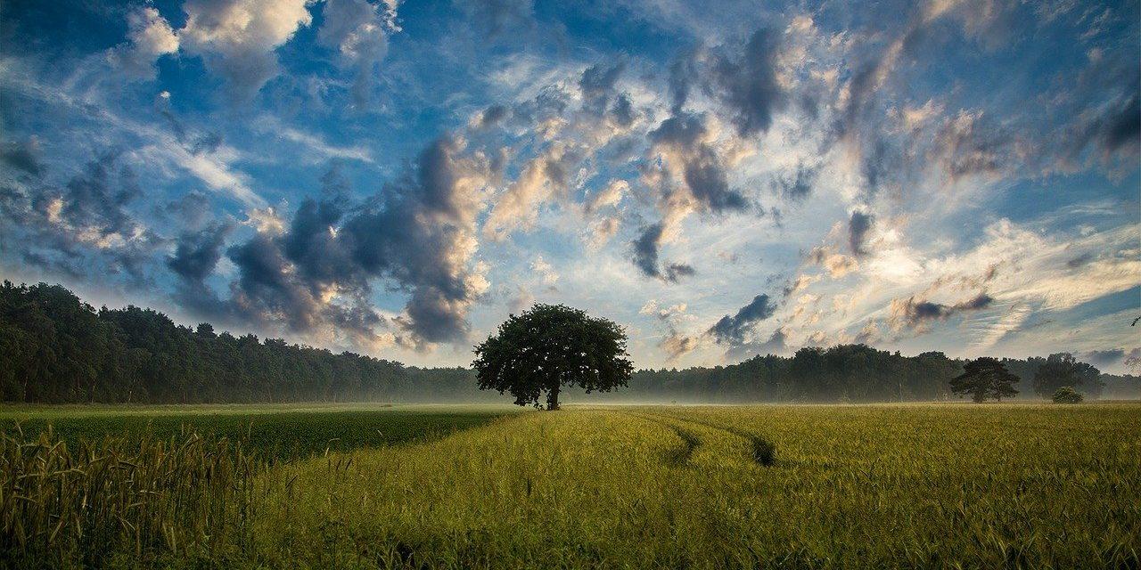 Gestione sostenibile delle risorse per la tutela dell'ambiente (2016)
