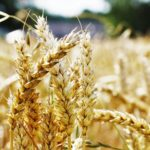 Filiere Agroalimentari Toscane (2017-2018)