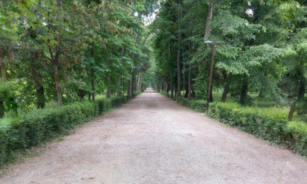 Mettere radici: vantaggi, rischi e gestione del verde urbano (Firenze, 3 luglio)