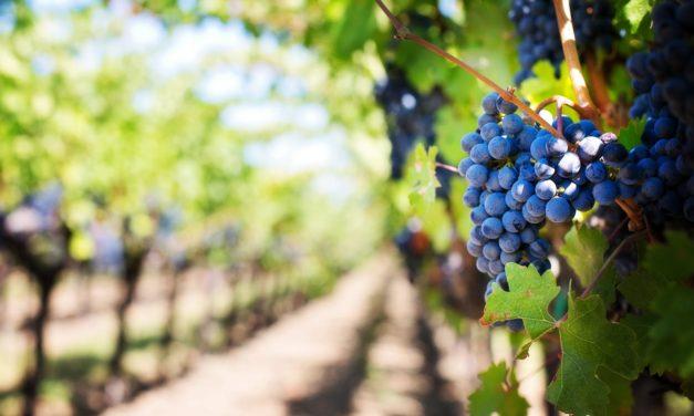 """Convegno """"Storia della vite e del vino in Italia e nel Chianti"""" (25-26 ottobre)"""