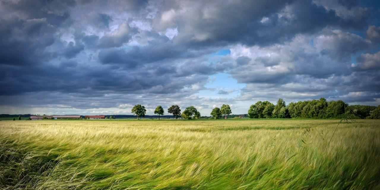 Clima Ambiente Agricoltura (2020)