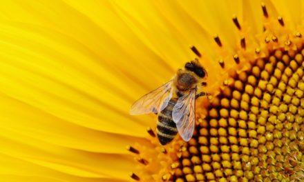 20 maggio 2020: Giornata mondiale delle api