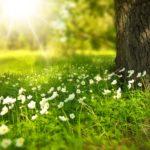 """Ambiente, nuovo """"alleato"""" per il Comune di Bagno a Ripoli per la sua tutela e valorizzazione"""