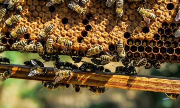 Le api per lo sviluppo sostenibile (2 ottobre – Villa Bardini, Firenze)
