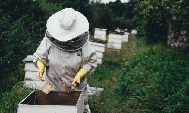 """Incontro """"La sensoristica in apicoltura"""" (22 febbraio)"""