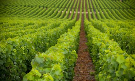 """Webmeeting """"La viticoltura nelle aree montane, prospettive di valorizzazione e di sviluppo del territorio"""" (17 marzo)"""