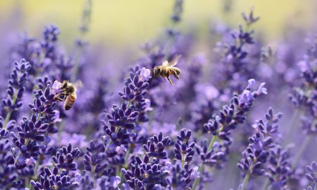 """Incontro """"La Sensoristica in apicoltura. Caratteristiche ed utilità di bilance e sensori, lettura ed impiego dei dati"""" (29 marzo)"""