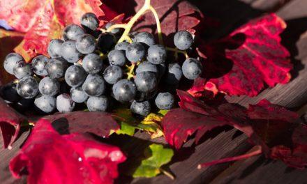"""""""Il vino nel legno – esperienze di filiera locale"""" (6 agosto 2021)"""